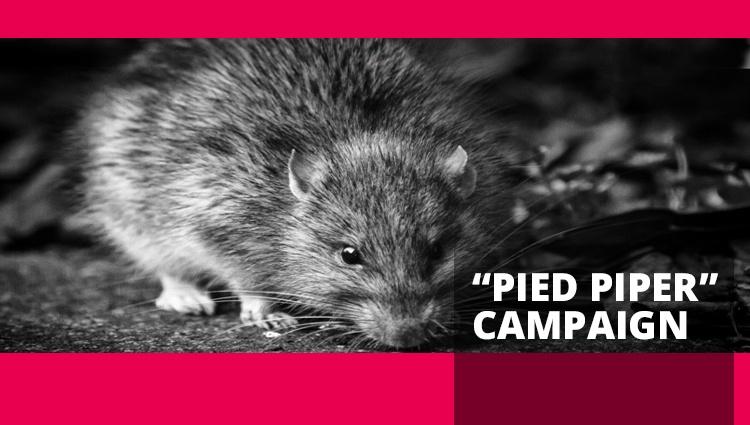 Pied Piper Campaign