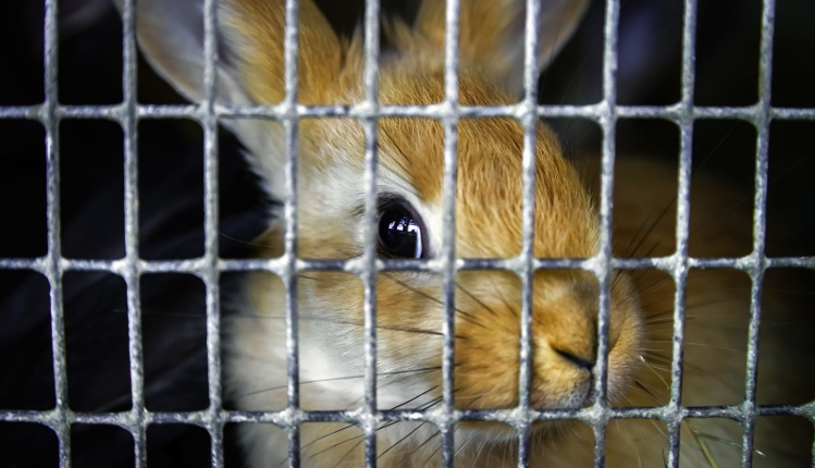 Preventing Bad Rabbit Is Only Remarkable If It's Unremarkable